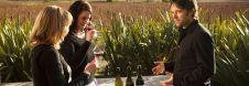 blenheim wine tasting
