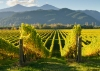 View-of-the-vineyards-in-Marlborough